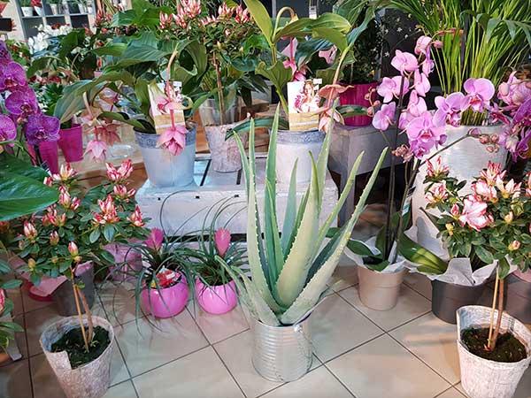 Bar à fleurs Montalieu - plantes vertes et orchidées