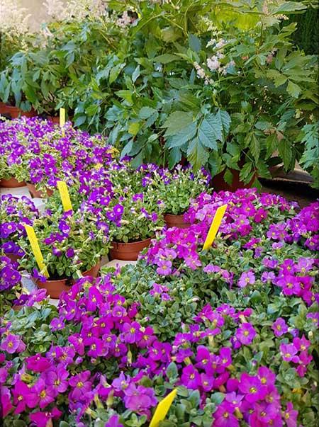 Bar à fleurs Montalieu - les plantations de printemps