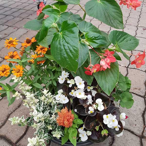 Bar à fleurs Montalieu - coupe plantes deuil
